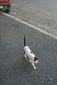 cat-001_2799485260_o