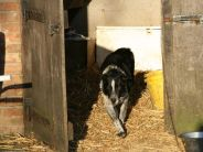 farm-dog-002_391396040_o
