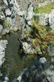 fish-pond-hospital-hill-001_2049312858_o