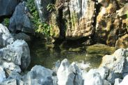 fish-pond-hospital-hill-004_2048527281_o