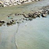 fishermans-wharf-004_303413645_o