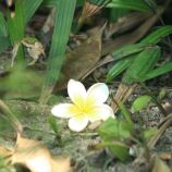flowers-at-melco-001_2035280335_o