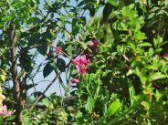garden-002_61175630_o