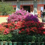 hong-kong---day-2-po-lin-monastery-0014_3021210269_o