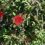 japanese-garden-monte-carlo-october-2010-011_5092151195_o
