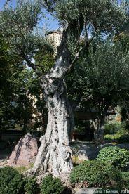 japanese-garden-monte-carlo-october-2010-030_5092156137_o