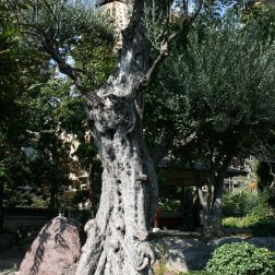 japanese-garden-monte-carlo-october-2010-030_5092156137_o