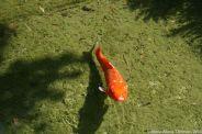 japanese-garden-monte-carlo-october-2010-031_5092156441_o