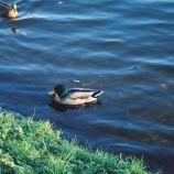 lake-baldeney-012_64662362_o
