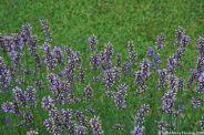 le-manoir-aux-quat-saisons-059_3717539983_o