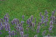le-manoir-aux-quat-saisons-060_3717540241_o