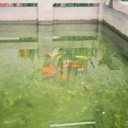 lin-fung-miu-temple-013_60981524_o