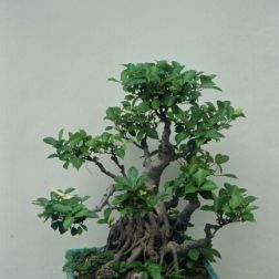 lou-lim-ioc-garden-006_60981775_o