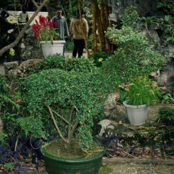 lou-lim-ioc-garden-009_60981830_o