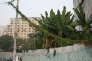 macau-trees-001_2053876771_o