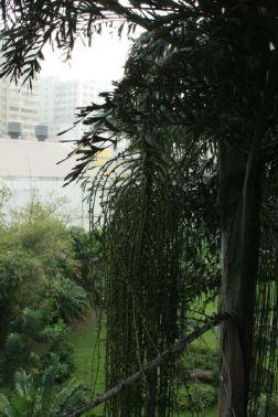 macau-trees-006_2053877343_o