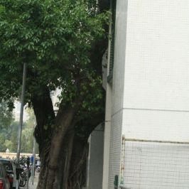 macau-trees-007_2053877433_o