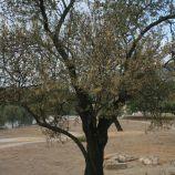 milreu-roman-ruins-055_3944202633_o