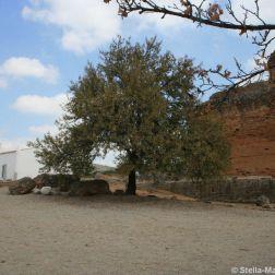 milreu-roman-ruins-057_3944981992_o