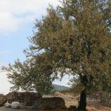 milreu-roman-ruins-061_3944203081_o