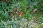 mong-ha-gardens-006_71707652_o