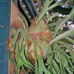mong-ha-gardens-007_71707672_o