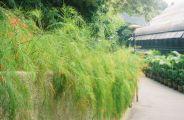 mong-ha-park-013_60983698_o