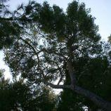 monte-carlo-october-2010-092_5092201189_o