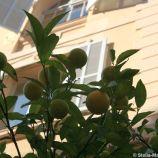 monte-carlo-october-2010-097_5092798826_o