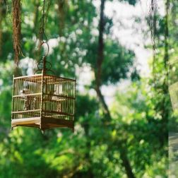 monte-fort-caged-birds-001_60983809_o