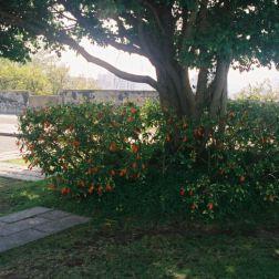 monte-fort-gardens-001_60983831_o