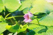 monte-fort-gardens-002_60983853_o