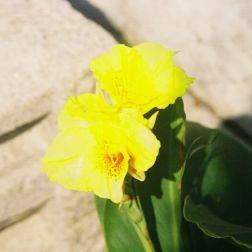 monte-fort-gardens-003_60983871_o