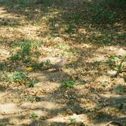 monte-fort-pigeon-001_60984075_o