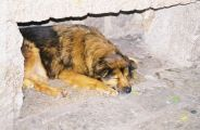 monte-fort-sleeping-dogs-001_60984095_o