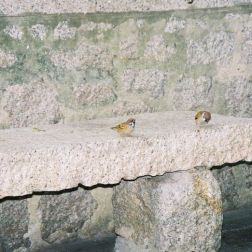 monte-fort-sparrows-001_60984116_o