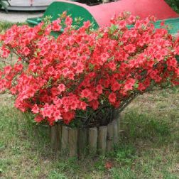 monza---flowers-001_2499069391_o
