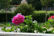 monza---flowers-002_2499069543_o