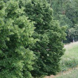 monza---trees-001_2499172827_o