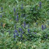 monza---wild-flowers-001_2499952636_o