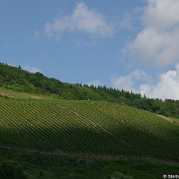 mosel-from-zeltingen-rachtig-to-traben-trarbach-029_3618276524_o