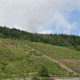 mosel-from-zeltingen-rachtig-to-traben-trarbach-031_3618277366_o