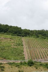 mosel-from-zeltingen-rachtig-to-traben-trarbach-032_3618277780_o