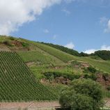 mosel-from-zeltingen-rachtig-to-traben-trarbach-035_3618279578_o