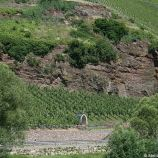 mosel-from-zeltingen-rachtig-to-traben-trarbach-036_3618280226_o
