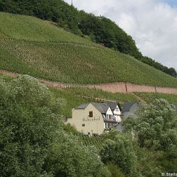 mosel-from-zeltingen-rachtig-to-traben-trarbach-038_3618281138_o