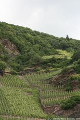 mosel-from-zeltingen-rachtig-to-traben-trarbach-062_3617473185_o