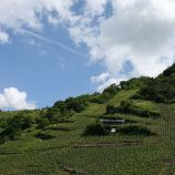 mosel-from-zeltingen-rachtig-to-traben-trarbach-108_3617491963_o