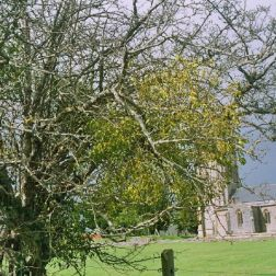 muchelney-abbey-002_123585285_o