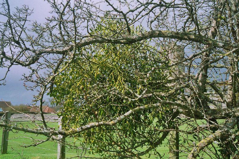 muchelney-abbey-003_123585330_o
